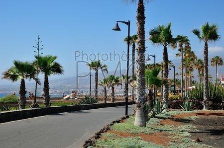 Playa de las Americas (Tenerife)