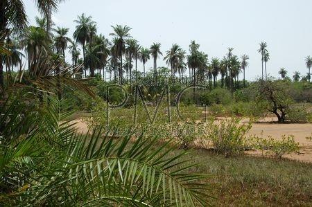 Makasutu (Gambie)