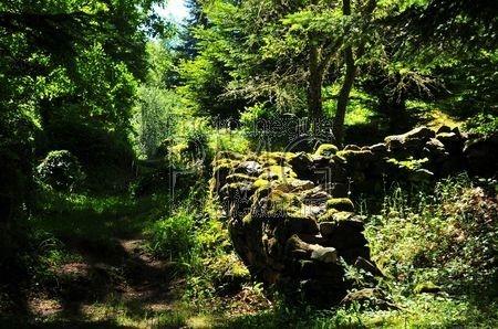 Chartreuse De Port Ste Marie (Puy de Dôme)
