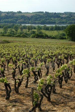 En Anjou (Maine et Loire)