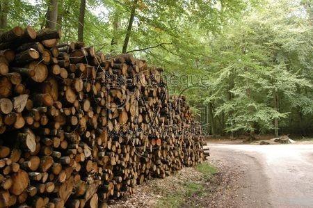 Forêt de Bercé (Sarthe)