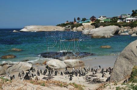 Saint-Simon's Town (Afrique du Sud)