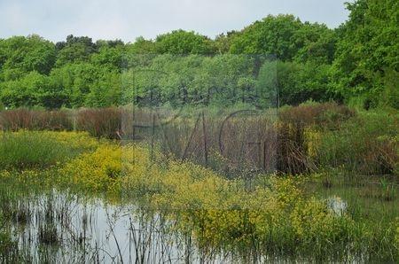 Forêt d'Orléans (Loiret)