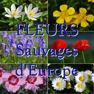 FLEURS SAUVAGES D'EUROPE